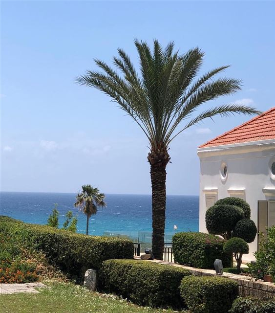 @libano_brasil livelovelebanon nature water beavh palmtrees summer... (Byblos, Lebanon)