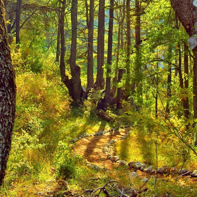 Let's walk in the wood..... Tannourine 🌲............ (Arz Tannoûrîne)