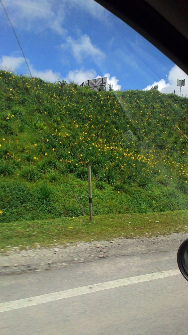 As We Drive By Yellow Lilies Wave & Smile