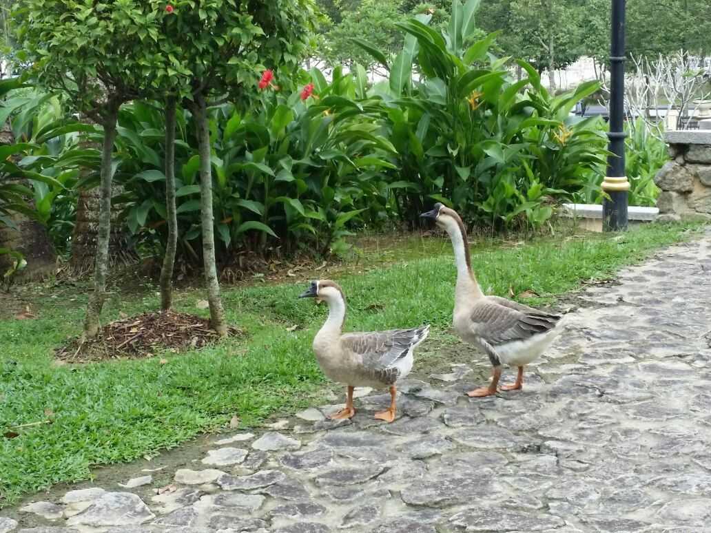 Geese are Very Nervous Neighbors