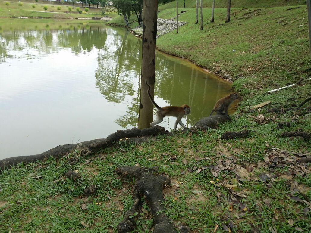 Monkeys in Malaysia...