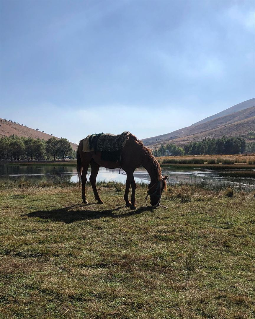 horses horse horsesofinstagram horseriding horselove ...