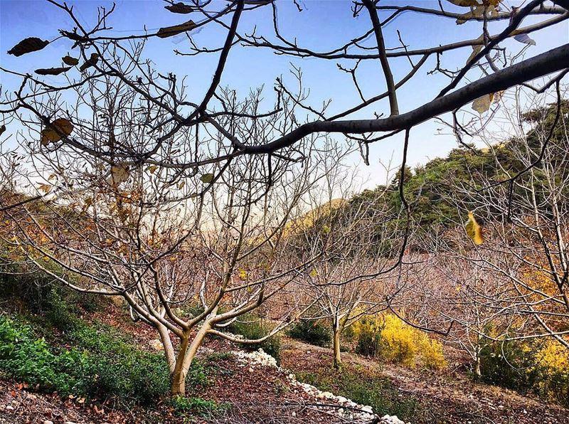 nature retro instagood wanderlust travelgram welltraveled ... (Al Qubayyat, Liban-Nord, Lebanon)