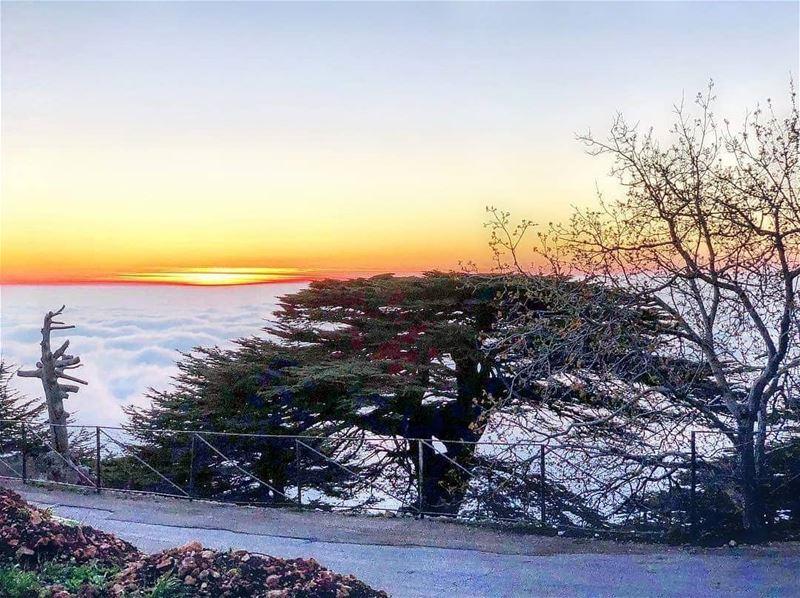 هيدا لبنان 🌲🇱🇧🌲------------------------------------------------------- (Maaser El Shouf Cedar Reserve محمية ارز معاصر الشوف)