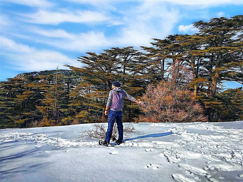 Dear winter, please come sooner I miss you .... favorite season ... (Arz Tannoûrîne)