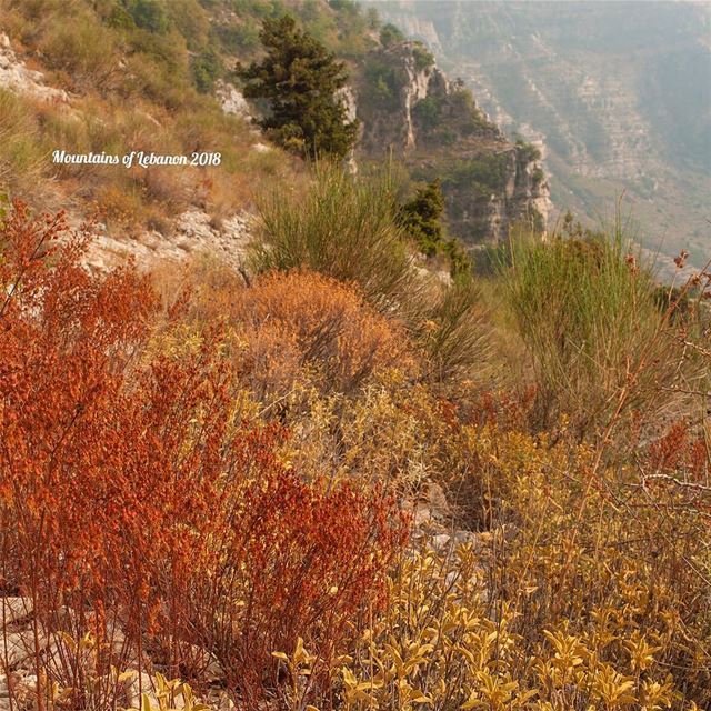 Late summer colors reds, browns and yellows! a cliff and a juniper tree... (Akoura, Mont-Liban, Lebanon)