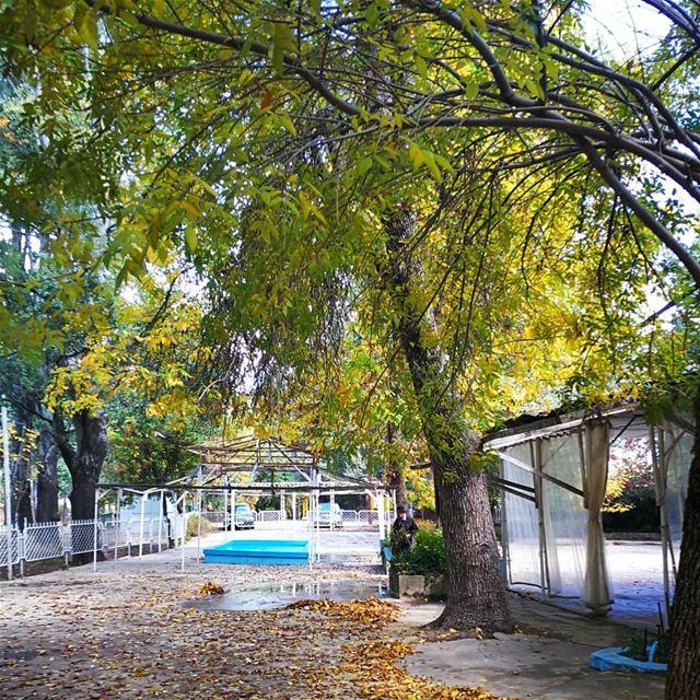 __________________________________________ libanon autumn chebanieh... (Chbânîyé, Mont-Liban, Lebanon)