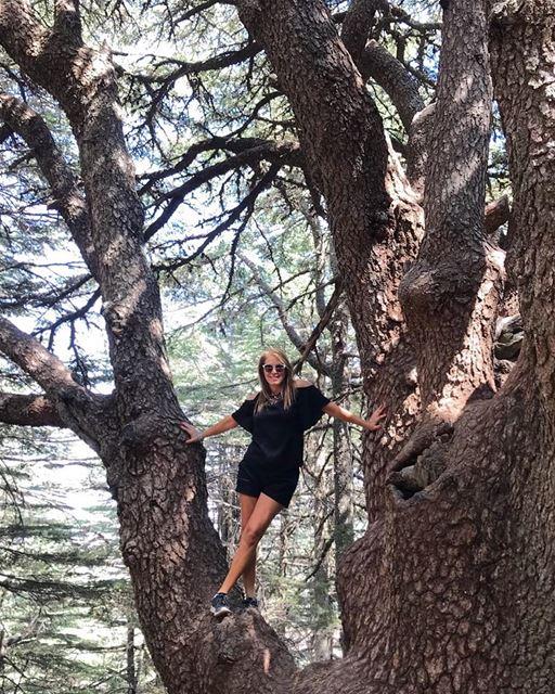 Al Shouf Cedar Nature Reserve 💚🇱🇧💚It is a peaceful and beautiful...