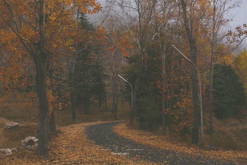 hello autumn 🍁🍂 autumn naturephotography landscapephotography ...