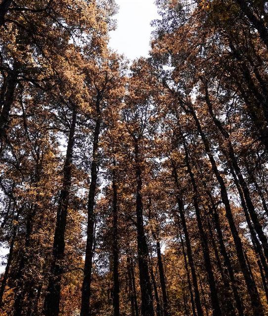 Autumn walks 🍂 (El Qammoûaa)