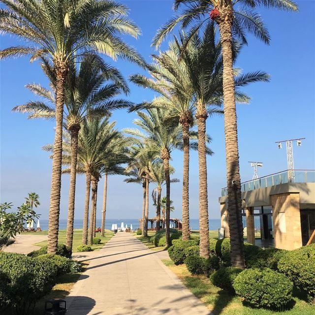 jbeil nature beach explore livelovelebanon mediterranean instagram ... (Plage Des Rois)