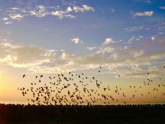 Act without expectation... flyingbirds sunset expectations sunsetthoughts... (Beirut, Lebanon)