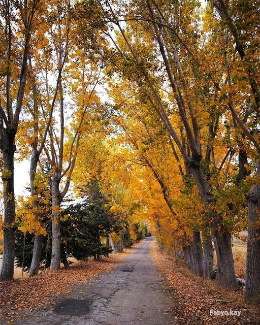 Outono chegando no Líbano! Onde é o seu lugar favorito para ver as folhas... (El Laklouk, Mont-Liban, Lebanon)