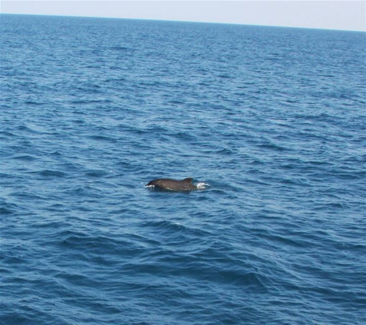 A dolphin in the Lebanese waters 🐬............ dolphins  sea... (Lebanon)