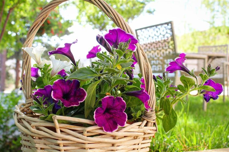 خالفي الورد وأزهري في كل الفصول....🏵🍃 روقان تصوير عدستي لبنان قهوتي ...