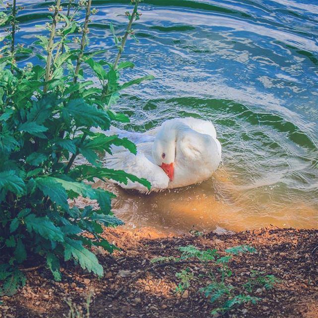 '...allow me to show u the art of se-duck-tion hooman..' (Deïr Taanâyel, Béqaa, Lebanon)