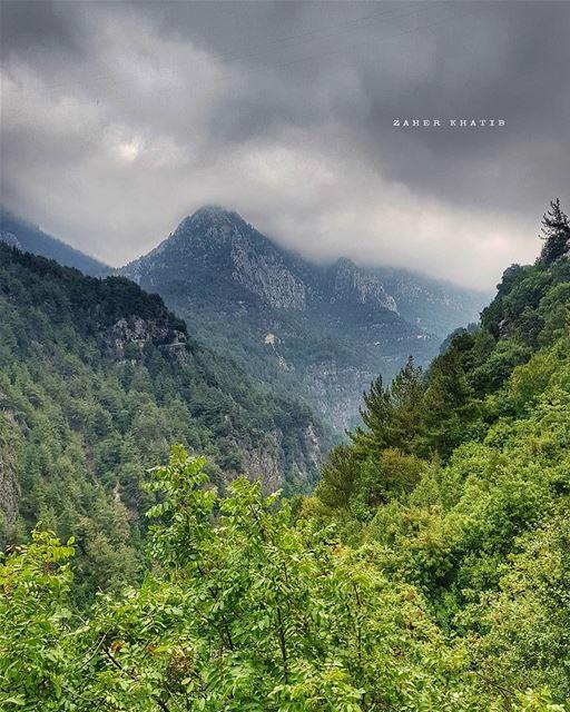كما ينبت العشب بين مفاصل صخرةوجدنا غريبين معاًو كانت سماء الربيع تؤلف نجم (Chouène, Mont-Liban, Lebanon)