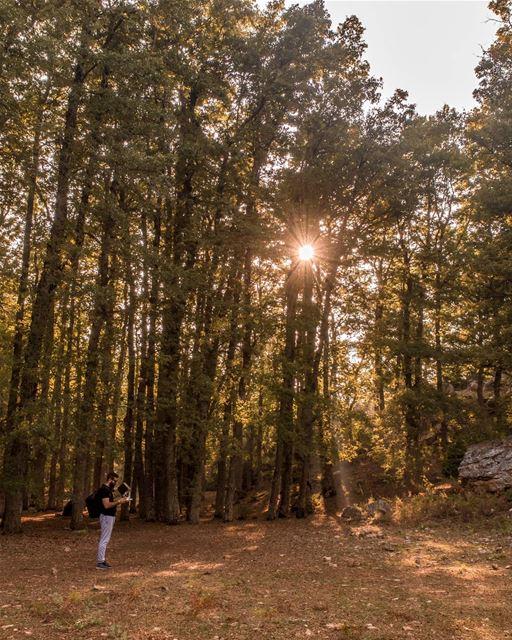 Summer Collapsed Into Fall 🍂... fnaydek akkar north lebanon dji ... (غابة العذر)