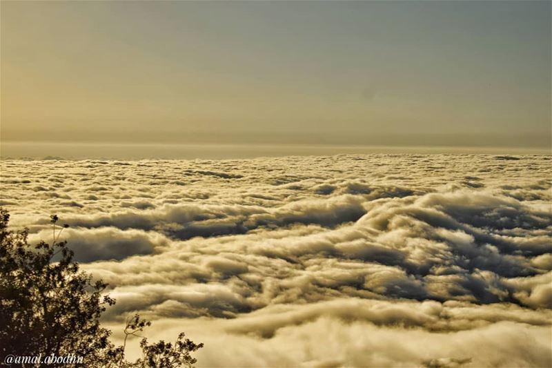 هناك مشهد واحد أعظم من البحر ، ذلك هو مشهد السماء . وهناك مشهد واحد أعظم من (محمية ارز الشوف)