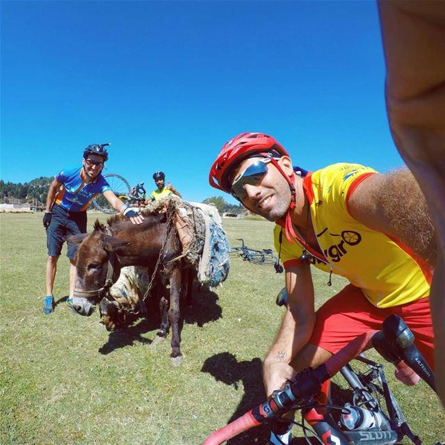Donkey selfie series@thegreatnix @m3r2os @sandramalkoun.. cycling ...