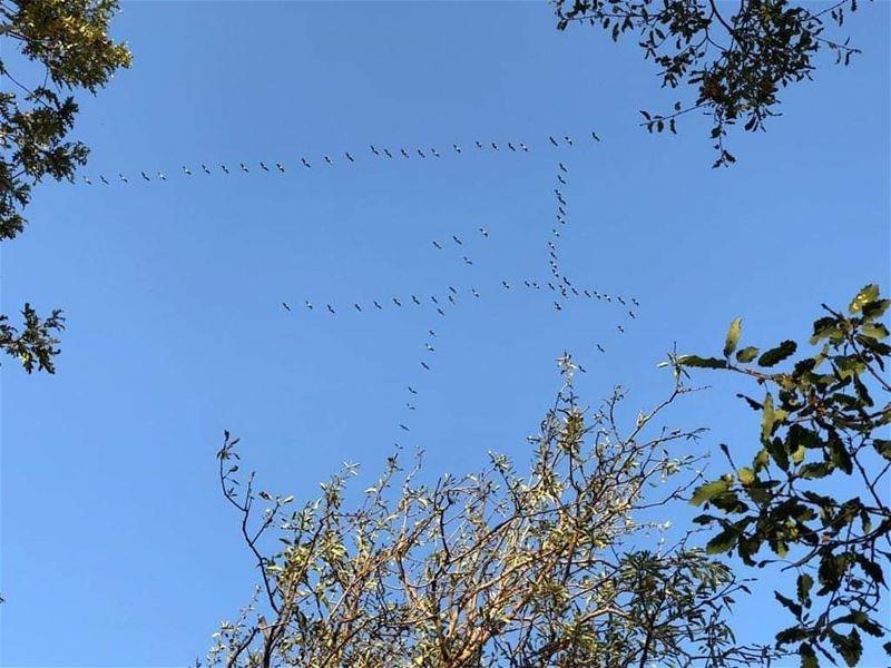 Grus Grus Flying peacefully above JabalMoussa Mountain. NoHunting... (Jabal Moussa Biosphere Reserve)