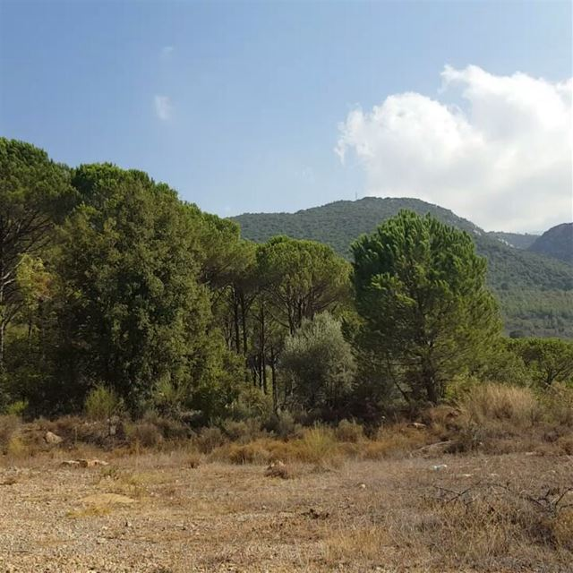 nature peace treescape freelife feelingfree bzebdine lovelyplace ... (Bzébdîne, Mont-Liban, Lebanon)