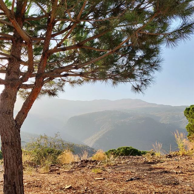 Mountain life>>> City... (El Mtaïn, Mont-Liban, Lebanon)