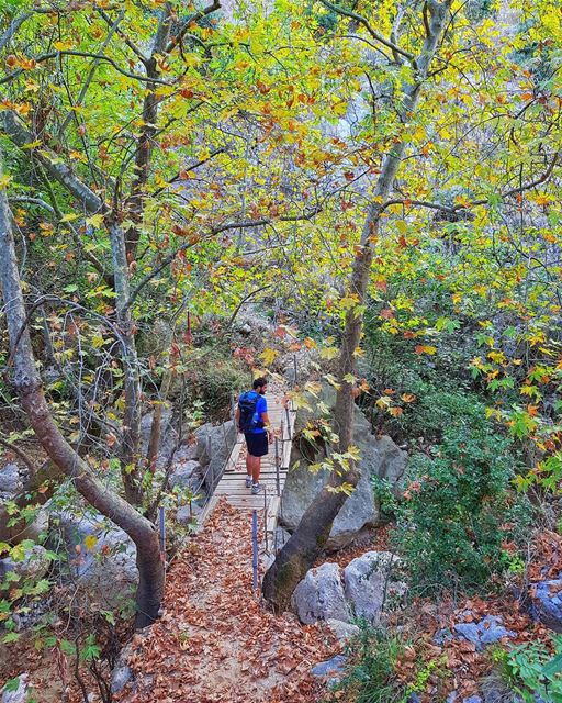 Our Autumn hikes are here🍁⚠️ Join us to Jabal Moussa this Sunday (read... (Jabal Moûssi)