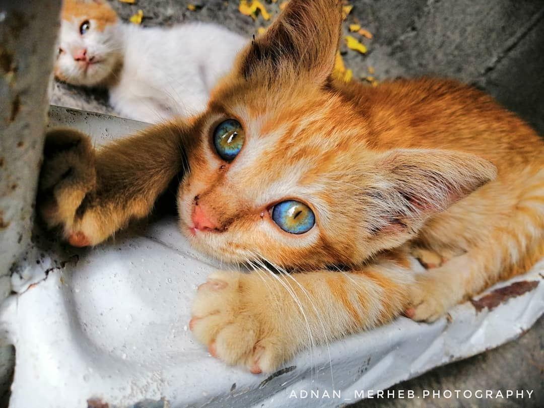 World in its eyes 🌍😍 cat cats socialsteeze catsagram catstagram ... (Bardé, Liban-Nord, Lebanon)