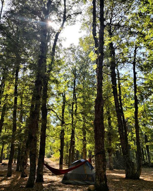 Escape... camping hammockcamping forest awayfromthecity wildlife ... (Akkar)