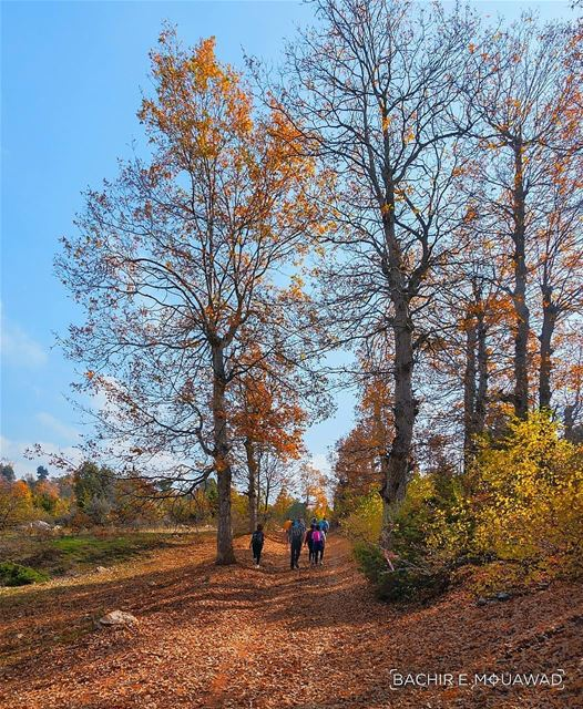 hiking  hikingadventures  fall  fallseason  sky  bluesky  trees  path ...