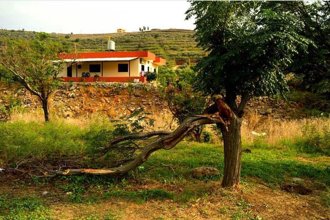 📲Turn ON Post Notifications Lebanon lebanon🇱🇧 beirut beirut❤️ ... (Aakar, Liban-Nord, Lebanon)