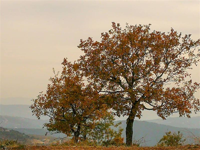 ------------------------------------------------------------ autumn trees... (North Governorate)