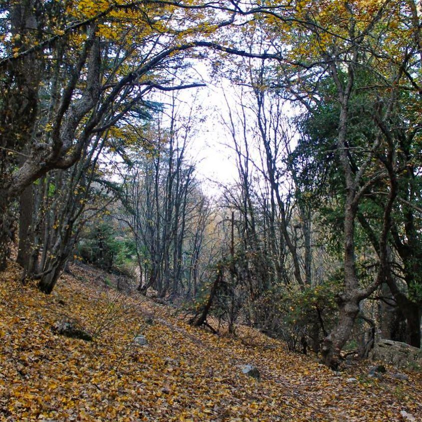 Autumn is a second spring when every leaf is a flower lebanon lebanese ... (Horsh Ehden Nature Reserve)