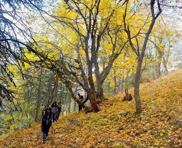 Fall in love with moments ✨🍁🍂🧡 hikingadventures autumnlovers ... (Horsh Ehden)
