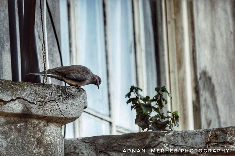 """"""" ستعرف مقدار هشاشتك، حينَ لا تقوى على التجاوز، و تبقى عالقًا فيما تشعر. """"... (Tripoli, Lebanon)"""
