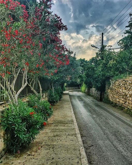 It will never rain roses, when we want to have more roses we must plant... (Byblos, Lebanon)