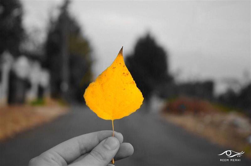 حافظ على اجمل اللحظات في ذاكرتك، و احمها من السقوط في شتات النسيان.ريم مرع