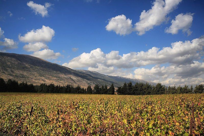 Autumn colors🍁 a7labaladbil3alam 🇱🇧..... photo love photograph... (Château Kefraya)