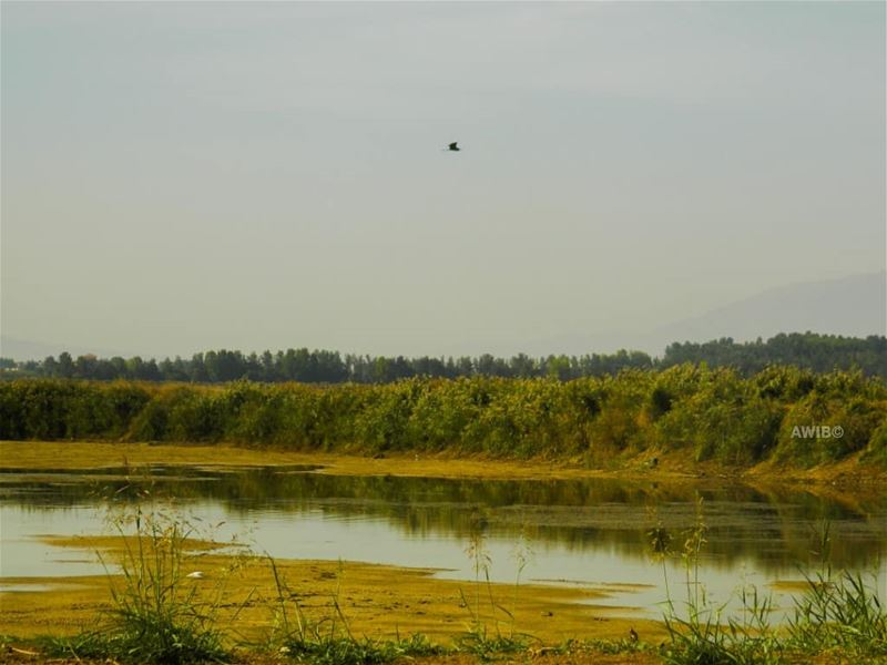 wild life water bird green field nature lebanon igers instago ...