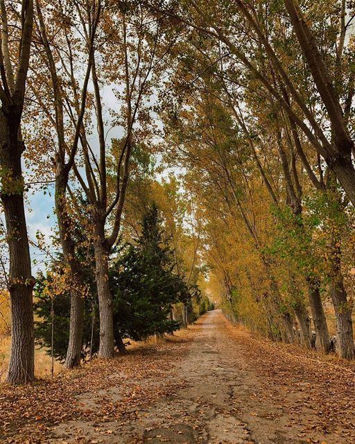 Cheers to sunny October road trips🍂.. laklouk livelovebeirut ... (El Laklouk, Mont-Liban, Lebanon)