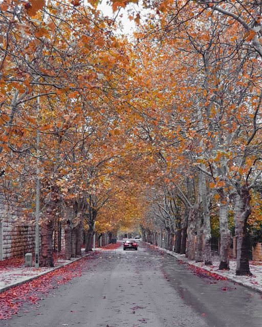les feuilles mortes.🍁🍂 (Mount Lebanon Governorate)