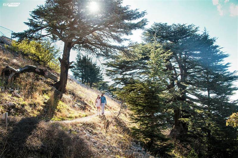 Lebanon MaaserElChouf Barouk Reserve Cedars 🇱🇧 LiveLoveBeirut ...