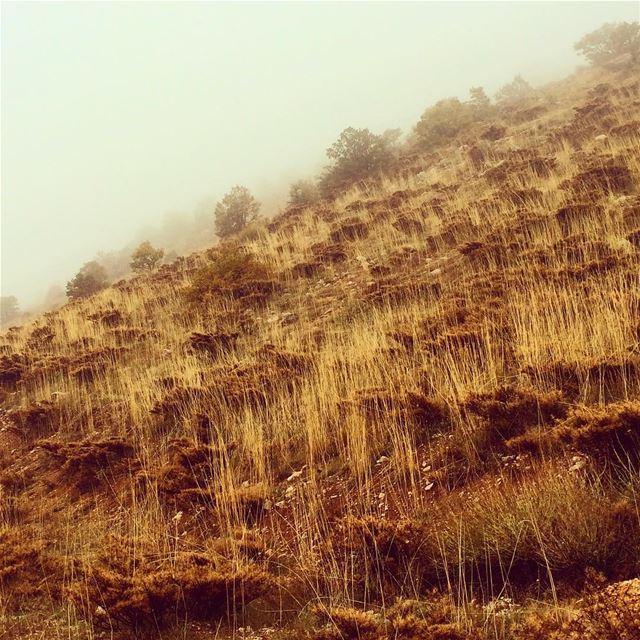 The earth has music for this who listen lebanon super_lebanon ... (Al Shouf Cedar Nature Reserve)