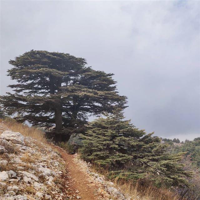 Cedars of... (Arz el Bâroûk)