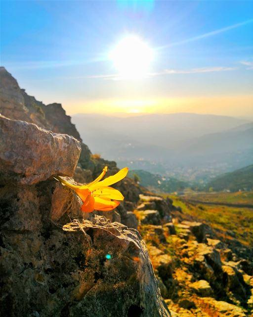 ........................................ (Falougha, Mont-Liban, Lebanon)