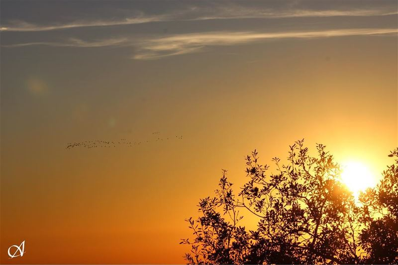 Emigrant birds with sunset emigrant birds sunset sky clouds tree ... (Jezzîne, Al Janub, Lebanon)