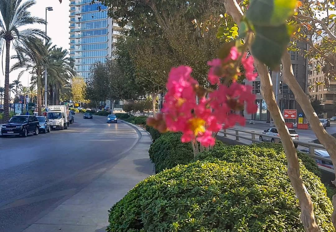 No one dares to dictate a color to Mother Nature 🌺📍Downtown Beirut ,,... (Downtown Beirut)