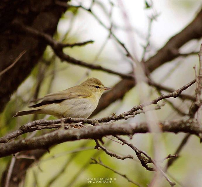 🔸willow warbler🔸🔸🔸🔸🔸 earthpix   macromood  macroclique ...