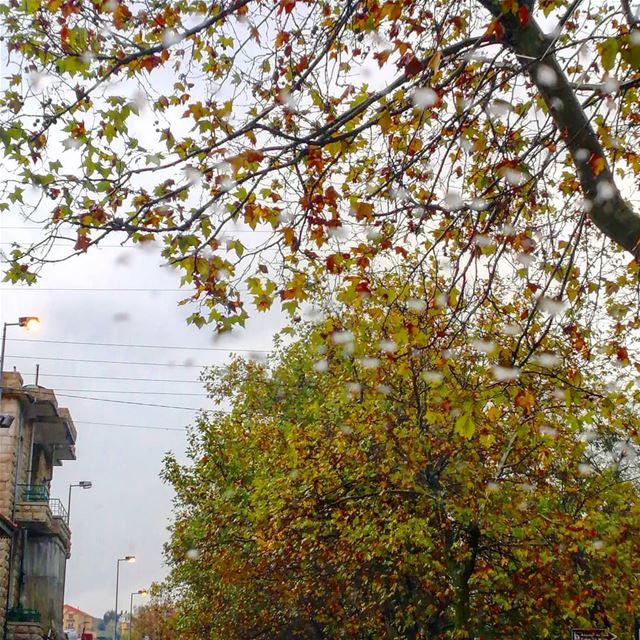 الورق الاصفر.. 🍁_________________________________________ autumn ... (Sawfar, Mont-Liban, Lebanon)